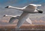 Duck Stamp 2015 winning painting by Minnesotan Joseph Hautman.