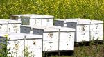 Beeboxes stolen Willmar