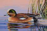 duck stamp 2016