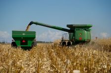 flickr_corn-harvest