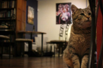 Cat Cafe Denver