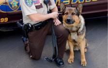 Major Anoka County Sheriff