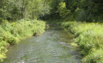 South Branch White Water River Fish Kill 2015 investigation