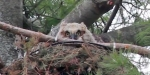 owlet minneapolis park nest usfws
