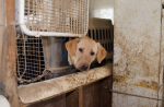 Labradors seized Wisconsin