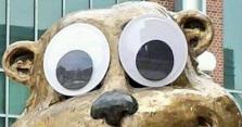 goldy gopher googly eyes