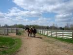 Chris-Leatherdale-horses