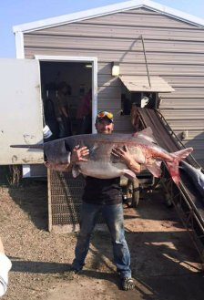 edited_paddlefish