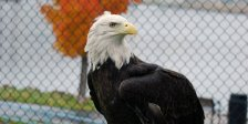 harriet-the-eagle-crop