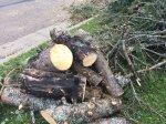 tree debris duluth