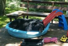 Black bear wading pool