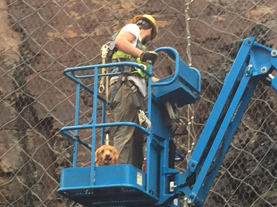 Runaway Dog Rescued After Getting Stuck On Rock Wall