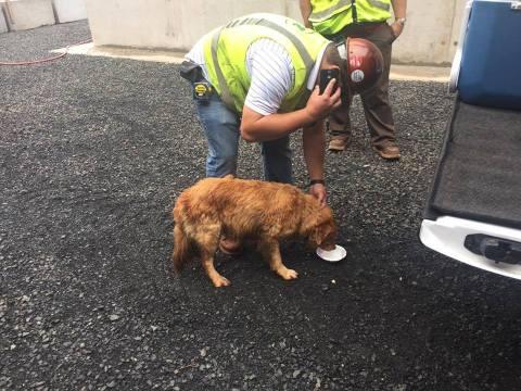 mndot-dog-rescue-water