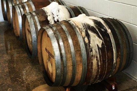 wild-mind-barrels