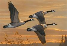 2016-duck-stamp-james-hautman
