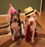 dogsinclothes