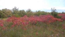lake-bronson-state-park-fall-colors