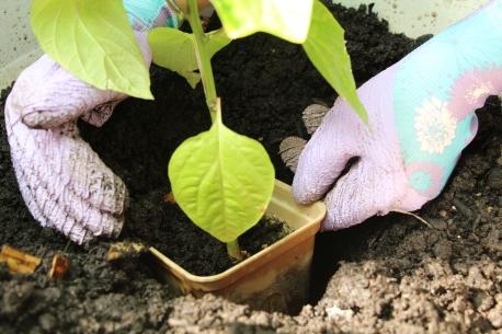 selfeco-pot-plant-in-ground